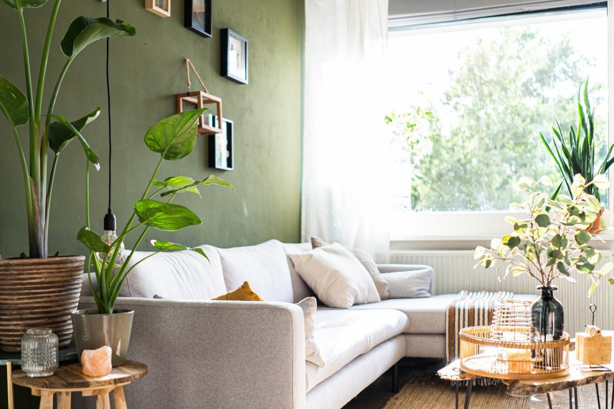 Cómo decorar con plantas cada espacio del hogar