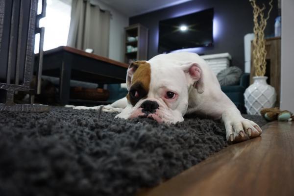 Pautas para decorar con alfombras